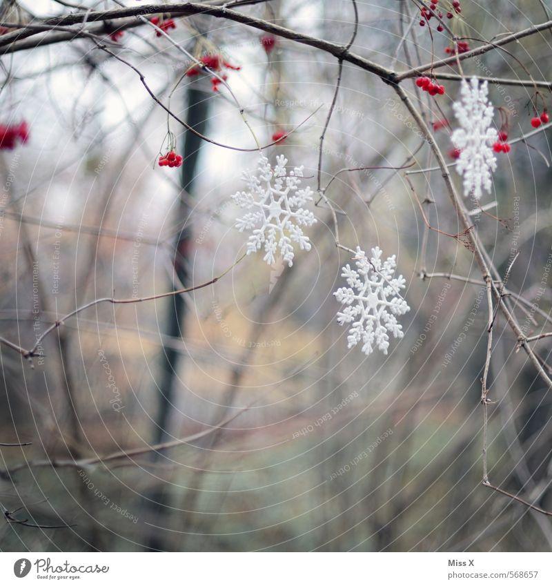 Leise rieselt der Schnee Garten Dekoration & Verzierung Weihnachten & Advent Winter Eis Frost Schneefall Sträucher hängen kalt Weihnachtsdekoration Schneeflocke