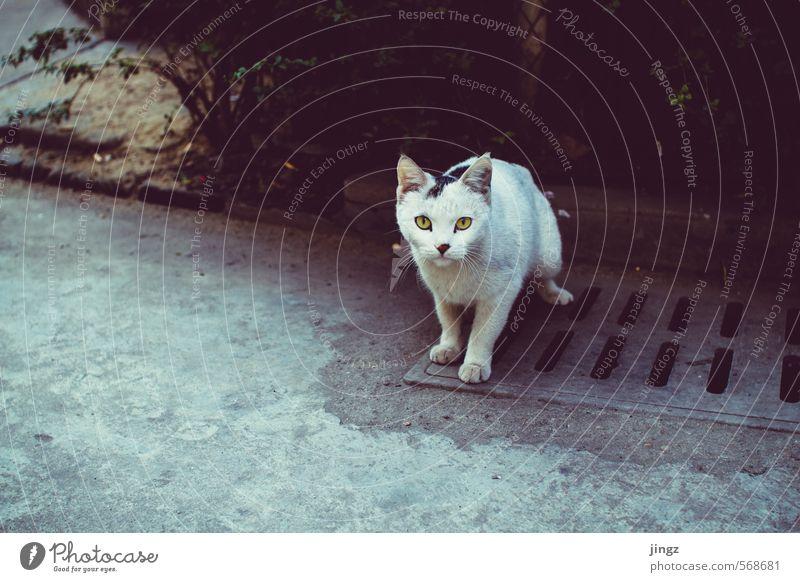 Lonesome cat Katze weiß Einsamkeit Tier gelb grau stehen warten niedlich Freundlichkeit Neugier Konzentration Wachsamkeit Haustier Schüchternheit friedlich