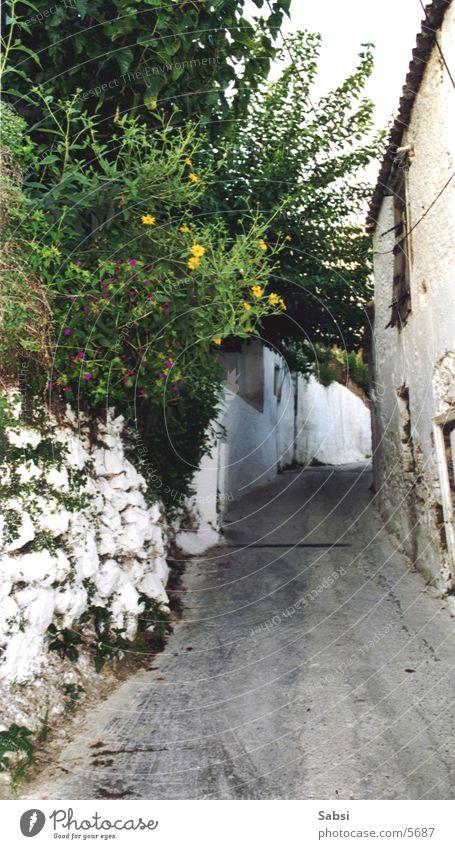 gasse Gasse Haus Griechenland Mauer Straße