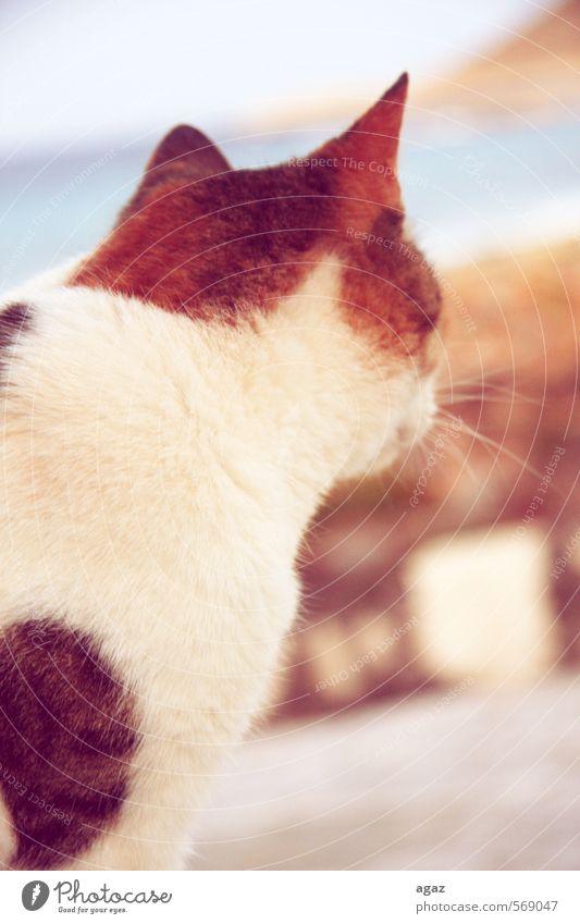 Kitty Katze Tier Freiheit Fell Ohr Haustier