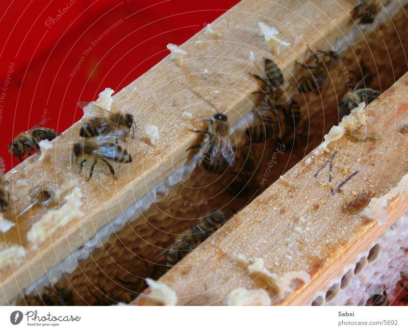 bine Verkehr Biene Bienenwaben Imker Bienenstock