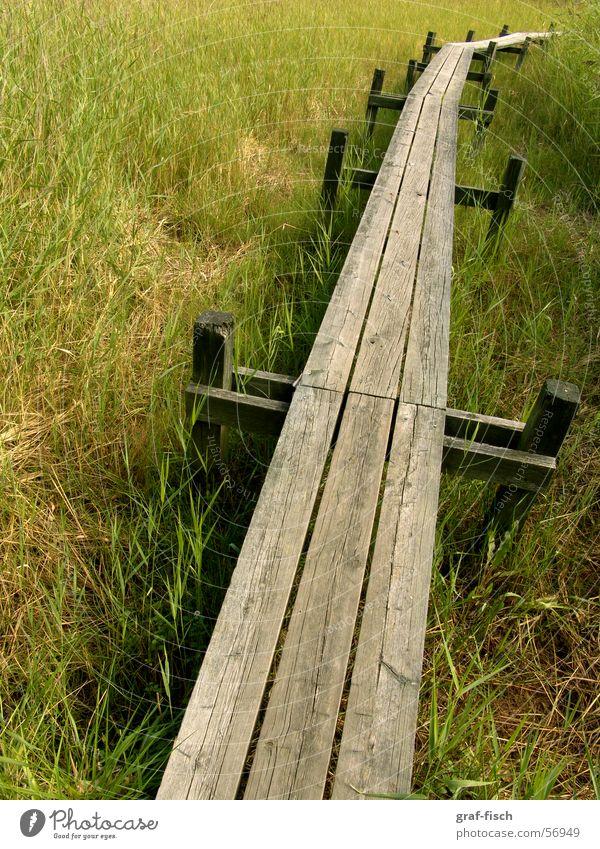 langer Steg durch den Sumpf Gras Holz Brücke