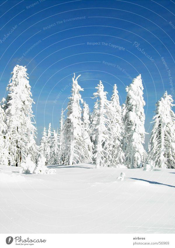 winter hoch 3 weiß traumhaft Schnee Himmel blau Sonne Schatten