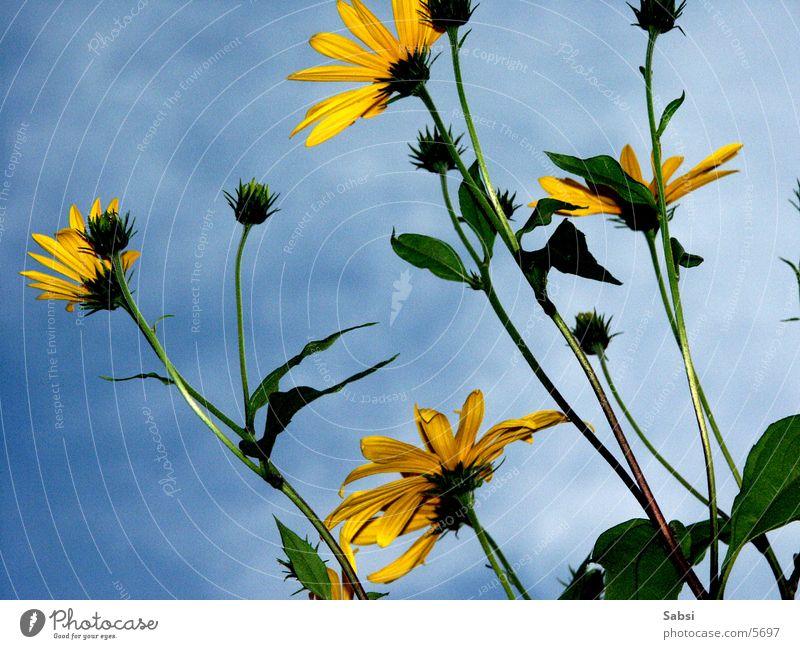 in den himmel Blume Blüte Stengel Himmel