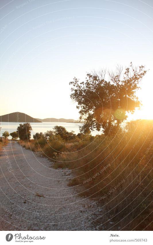 kroatien. Natur Landschaft Erde Wasser Himmel Sonne Sonnenaufgang Sonnenuntergang Sonnenlicht Sommer Schönes Wetter Wildpflanze Hügel Küste Meer Mittelmeer