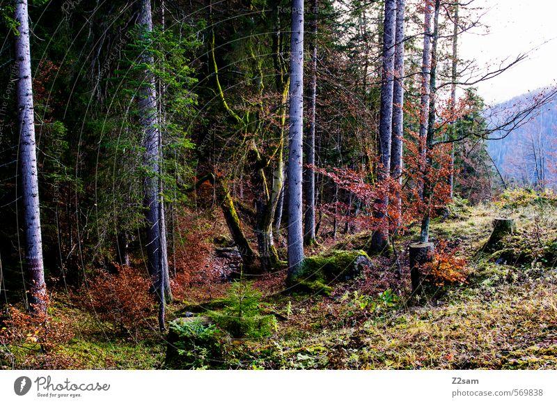Herbstimpression wandern Nebel Baum Sträucher Wald kalt nachhaltig natürlich mehrfarbig grün rot ruhig Farbe Idylle Natur Umwelt rotwand schliersee Farbfoto