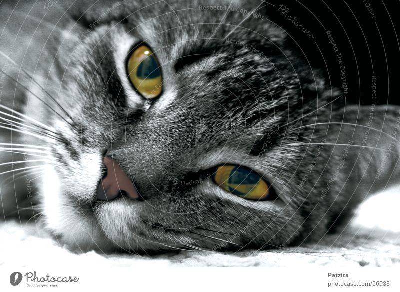 what eyes 2 schwarz Auge Tier Katze