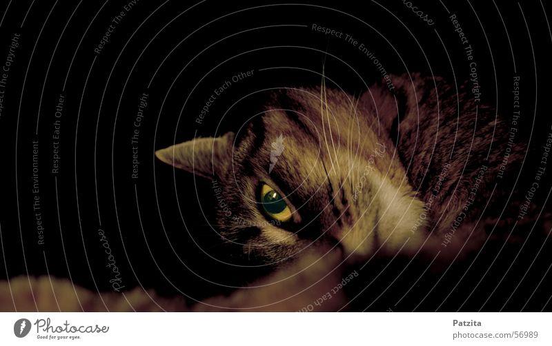 what eyes 3 schwarz Auge Tier Katze
