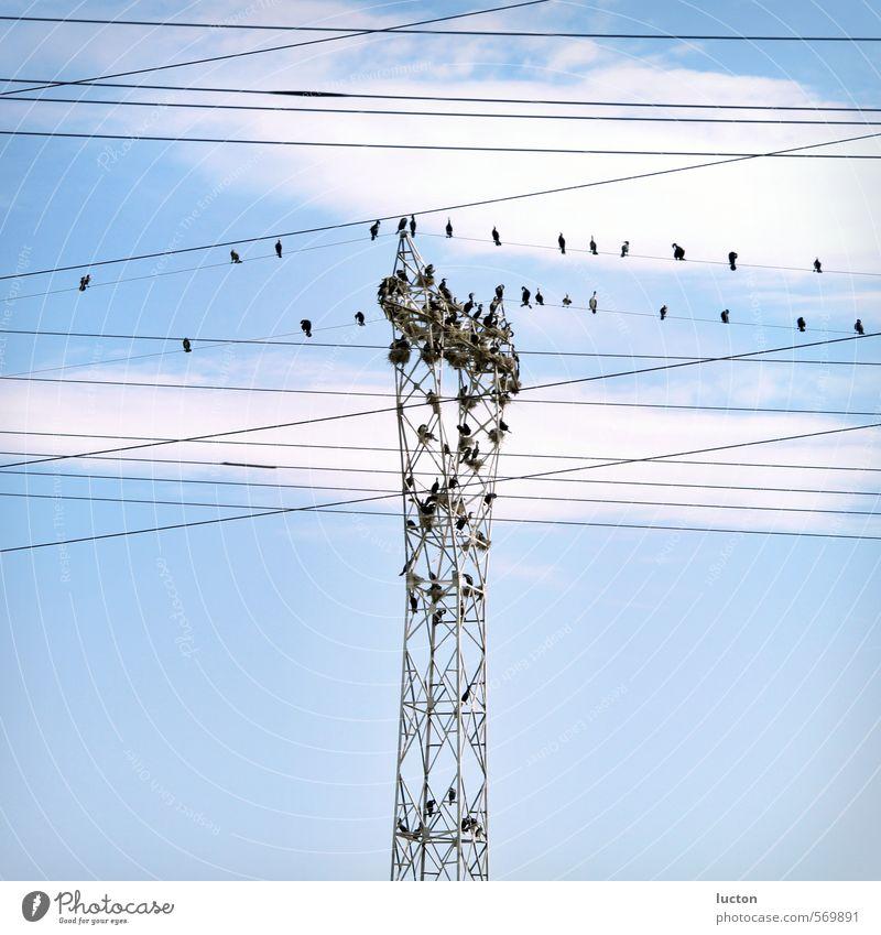 Vogelmast Himmel Natur blau Landschaft Tier grau Metall Vogel Energiewirtschaft Schönes Wetter Tiergruppe Kabel Strommast Schwarm Vogelschwarm umgänglich