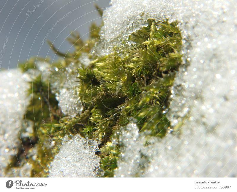 Sven - end of winter kalt Frühling Winter Tauwetter weiß grün Makroaufnahme Schnee bedecken Seil Detailaufnahme