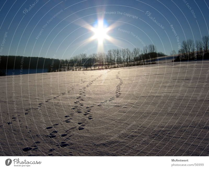 Deine Spuren im S...Schnee Ferne Wald Schnee Spuren Sonnenuntergang
