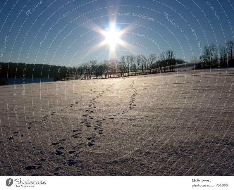 Deine Spuren im S...Schnee Ferne Wald Sonnenuntergang