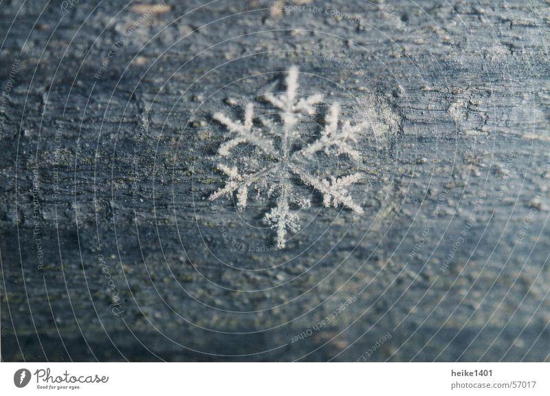 Eiskristall Schneekristall Winter Jahreszeiten kalt Einsamkeit Frost Natur Makroaufnahme Nahaufnahme