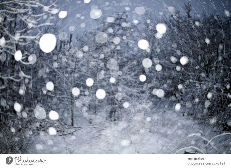 da treibt er Natur ruhig Winter kalt Schnee Garten träumen Stimmung Schneefall Eis glänzend trist Urelemente Frost fallen geheimnisvoll