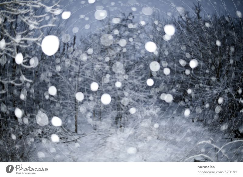 da treibt er Winter Schnee Winterurlaub Natur Urelemente schlechtes Wetter Unwetter Eis Frost Schneefall Garten fallen glänzend träumen kalt trashig trist