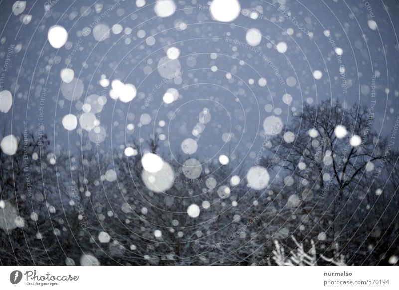 er kommt Natur Winter schlechtes Wetter Eis Frost Schnee Schneefall Baum fallen frieren glänzend träumen Traurigkeit kalt trashig trist Stimmung Umwelt