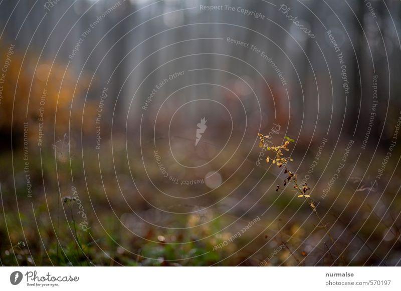 zart rauchig buntgrauer Herbst Freizeit & Hobby Joggen Yoga Kunst Natur Landschaft Pflanze Tier Wassertropfen Klima Wetter Nebel Baum Wald Erholung Traurigkeit