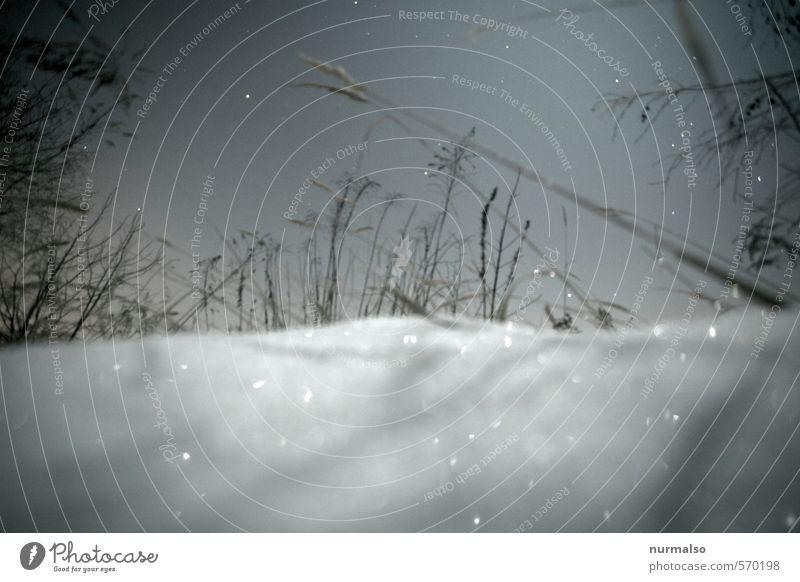 glitzernacht Natur Landschaft Pflanze Himmel Stern Winter Schönes Wetter Eis Frost Schnee Schneefall Park frieren glänzend ästhetisch kalt Stimmung ruhig