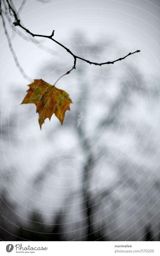 the Last Natur Pflanze Baum Einsamkeit Blatt Tier Haus Winter Wald Herbst Garten Kunst braun Park Freizeit & Hobby Wind