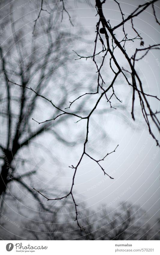 geästelig Garten Kunst Natur Pflanze Tier Herbst Winter Baum Park Wald Urwald atmen beobachten Erholung hängen träumen dehydrieren dunkel trashig trist Stimmung
