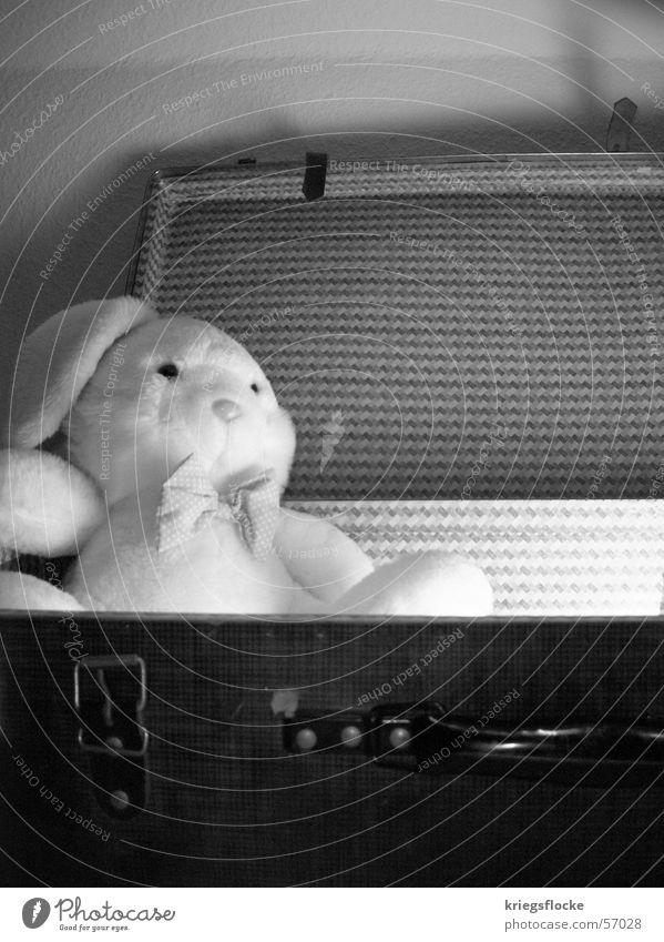 auferstehung des osterhasen Hase & Kaninchen Stoffhase Stofftiere Licht Schwarzweißfoto Osterhase Koffer Tierfigur