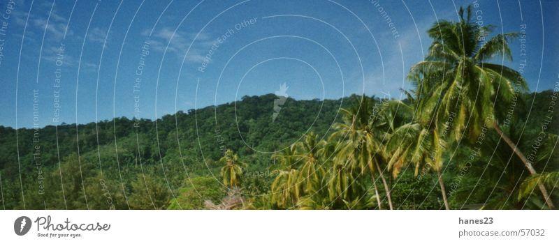 Tioman Island, Malaysia Sommer Strand Küste Asien Urwald Palme Thailand Pflanze Pulau Tioman Südchinesisches Meer