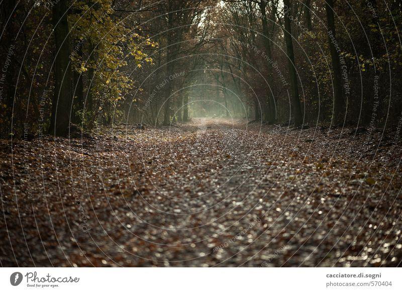Geradeaus und durch Natur Einsamkeit ruhig schwarz Wald dunkel Traurigkeit Herbst Wege & Pfade träumen braun bedrohlich Vergänglichkeit geheimnisvoll Sehnsucht