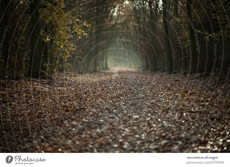 Geradeaus und durch Natur Herbst Wald Wege & Pfade bedrohlich dunkel gruselig braun schwarz ruhig bescheiden demütig Traurigkeit Sehnsucht Fernweh Enttäuschung
