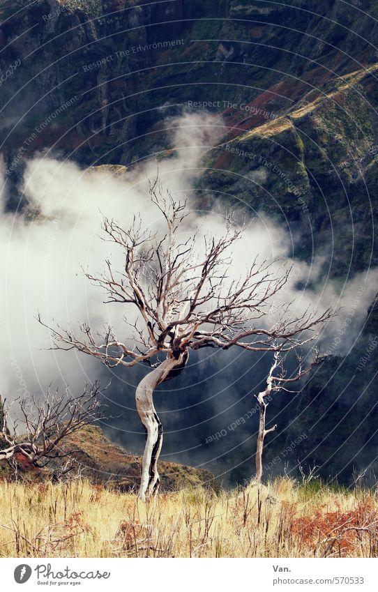Geisterbaum Natur Pflanze Wolken Herbst Baum Gras Felsen Berge u. Gebirge alt gelb kahl Tod Farbfoto mehrfarbig Außenaufnahme Menschenleer Tag Kontrast
