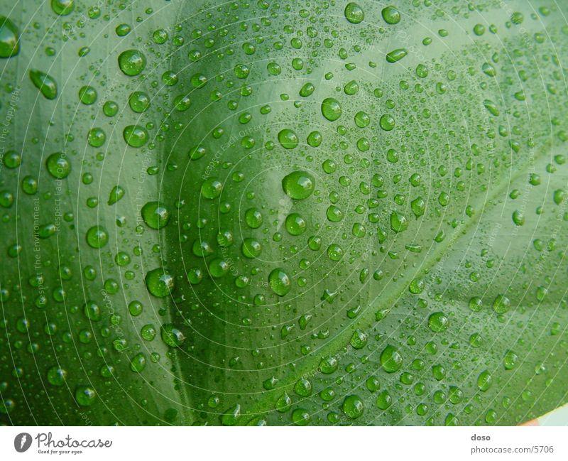 leaf Blatt grün Wassertropfen Regen