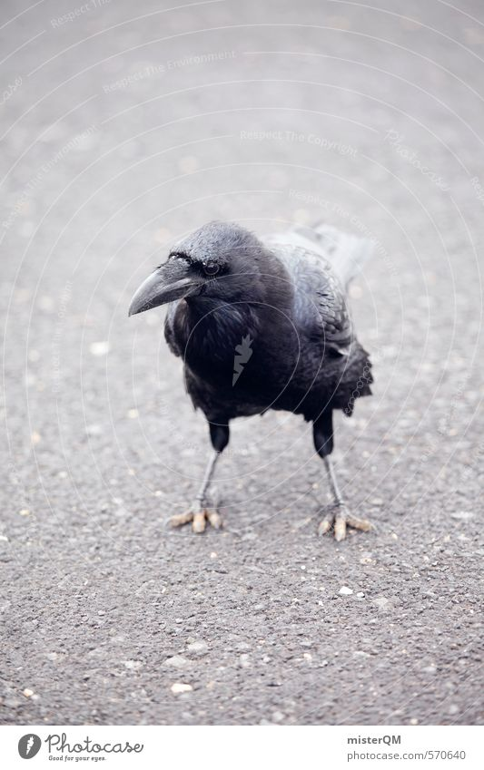 I.love.FV XI schwarz Kunst Vogel ästhetisch Flügel Asphalt Schnabel Rabenvögel Pechvogel