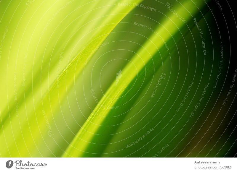 Die andere Wiese ist immer grüner grün Pflanze Sommer Blatt Wiese Gras