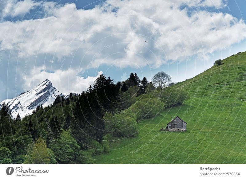 Heidiland Umwelt Natur Landschaft Himmel Wolken Schnee Wald Hügel Felsen Alpen Berge u. Gebirge Schneebedeckte Gipfel Schweiz Haus Hütte frisch schön natürlich