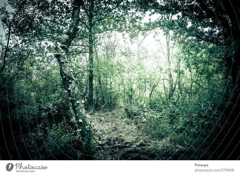 Natur grün Pflanze Baum Landschaft Blatt Wald dunkel Umwelt Herbst natürlich hell Angst Wetter Nebel wild