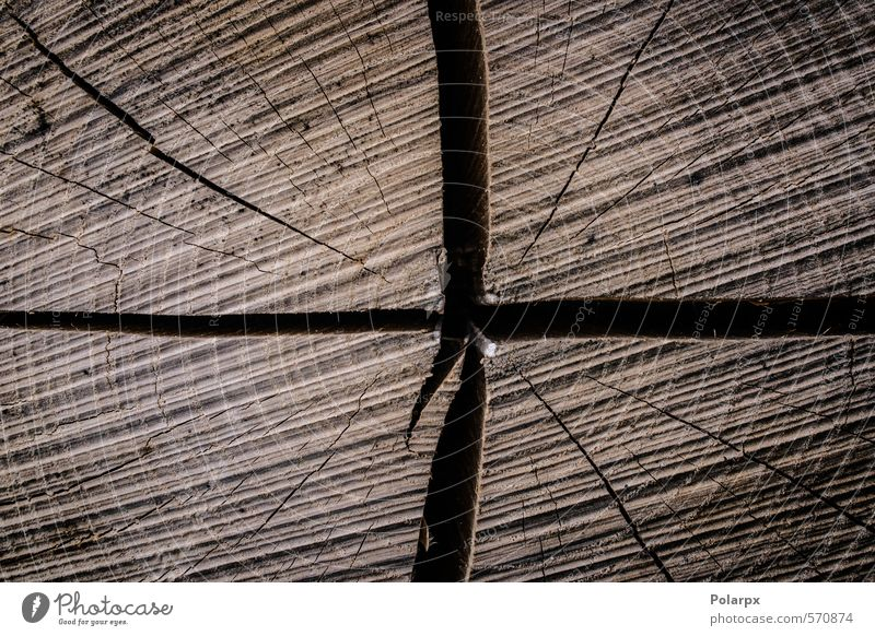 Holz Leben Tapete Industrie Natur Baum Wald Ring alt Wachstum historisch natürlich braun Hintergrund Grunge hölzern Nutzholz Konsistenz Abschnitt geschnitten