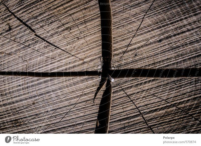 Natur alt Baum Wald Leben Holz natürlich braun Wachstum Industrie historisch Ring Tapete Riss Material Scheibe