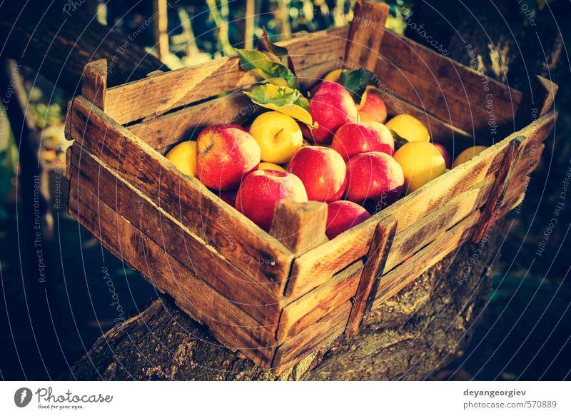 Äpfel in einer alten Holzkiste am Baum Frucht Apfel Sonne Garten Kind Natur Pflanze Herbst Gras Blatt Wachstum frisch klein retro gelb grün rot Tradition Kasten