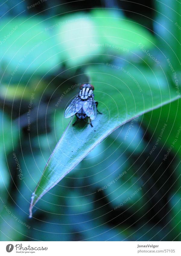 Fliege ruht Pflanze Blatt Tier nah Insekt