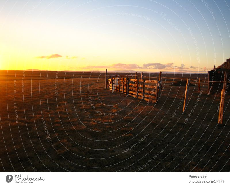 Farmshine Sonnenuntergang Nachmittag Wiese Zaun Bauernhof Island Feld Wolken Haus Ferne Himmel