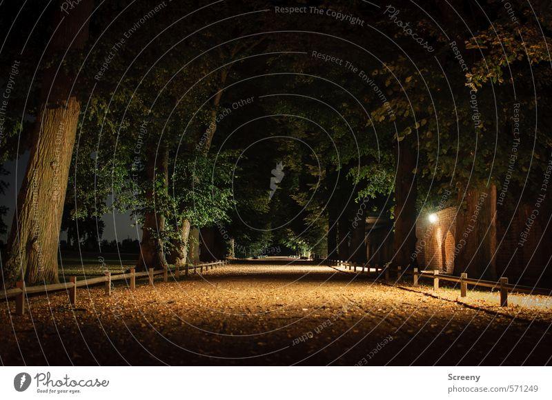 Dunkle Wege Baum Park Wege & Pfade Gefühle Stimmung ruhig Einsamkeit Angst Idylle Ziel dunkel ungewiss stagnierend Farbfoto Außenaufnahme Menschenleer