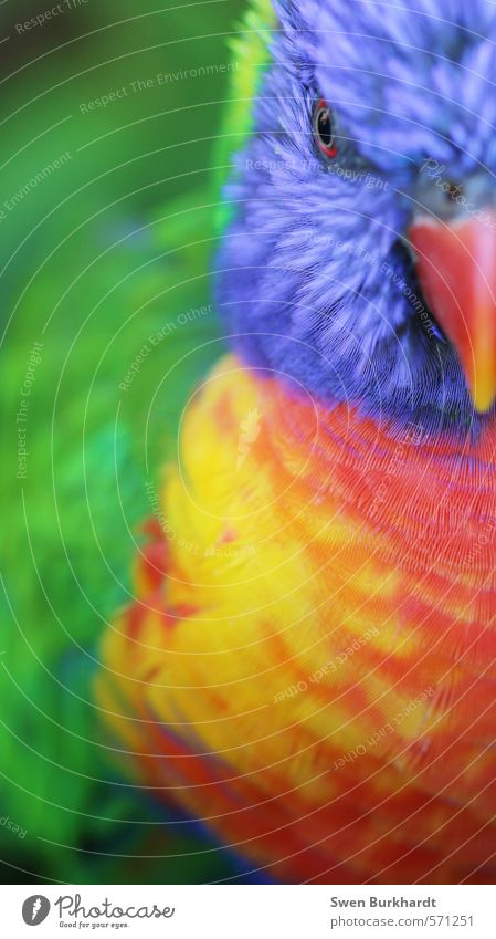 Colours of Nature Ferien & Urlaub & Reisen blau grün rot Tier gelb Umwelt Auge Vogel Wildtier verrückt Feder Abenteuer Flügel Tiergesicht