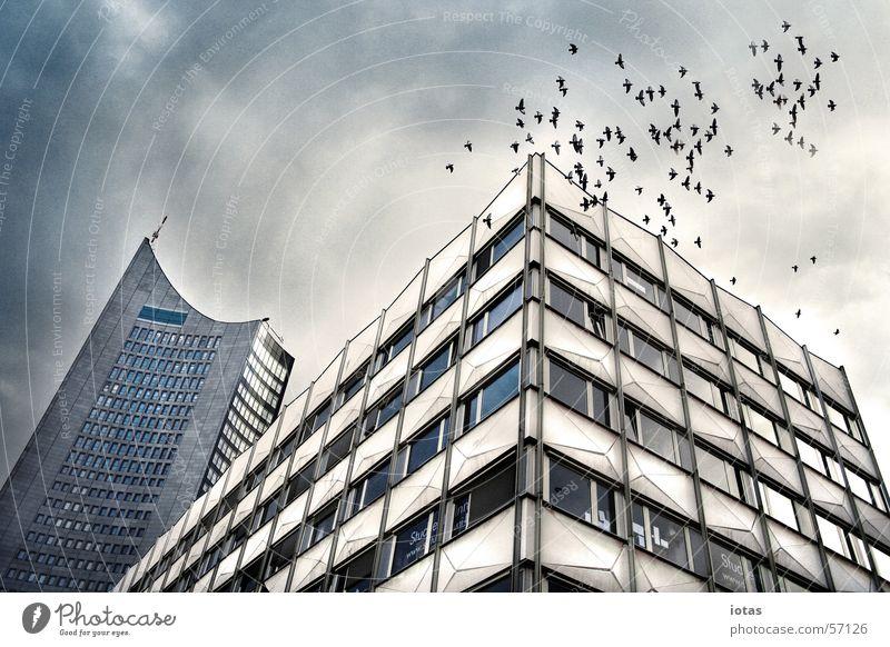 leipzig Himmel blau weiß grün Stadt Wolken ruhig schwarz Haus dunkel Fenster kalt Wand Herbst Architektur Stein