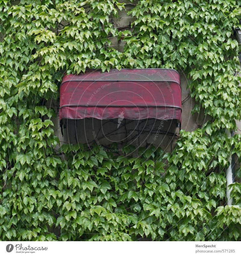 Dornröschens Schlafzimmerfenster grün rot Haus Fenster Wand lustig Gebäude Mauer natürlich Fassade geschlossen verrückt Bauwerk Paris Altstadt Wildnis