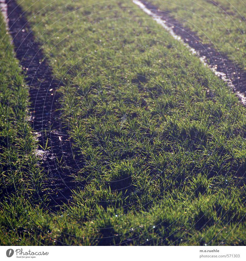 the end Ausflug Sommer Garten Umwelt Natur Landschaft Erde Sonnenlicht Schönes Wetter Gras Wiese Feld Dorf Menschenleer Fahrzeug Traktor fahren Landleben