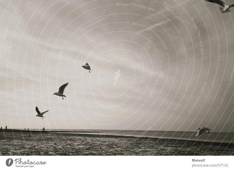 Seagulls Wasser Himmel Meer Strand Möwe Nordsee Flut Ebbe