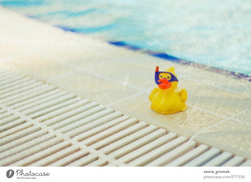 Ente Wellness Schwimmen & Baden Freizeit & Hobby Spielen Ferien & Urlaub & Reisen Tourismus Ausflug Abenteuer Freiheit Sommer Sommerurlaub Sonne Sonnenbad