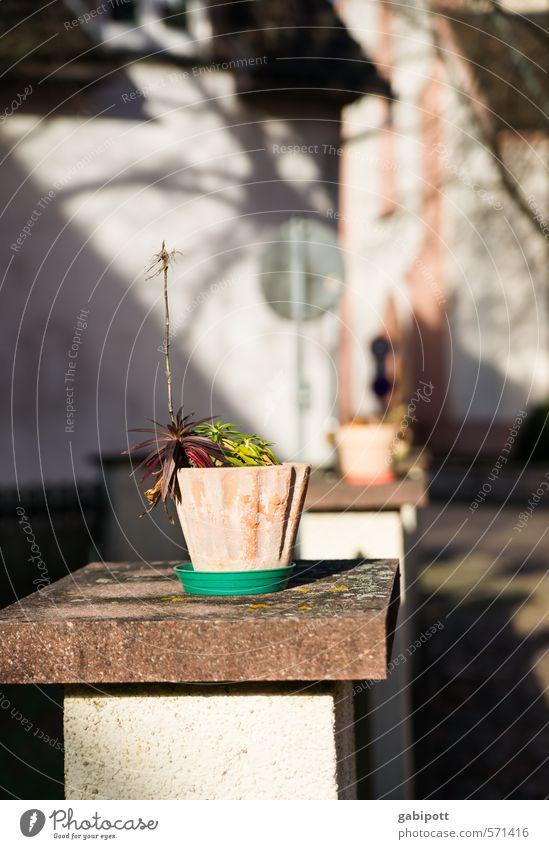 winterliches Winterlicht Pflanze Sonnenlicht Grünpflanze Topfpflanze Stadt Mauer Wand Fassade Freundlichkeit Fröhlichkeit hell Frühlingsgefühle Vorfreude