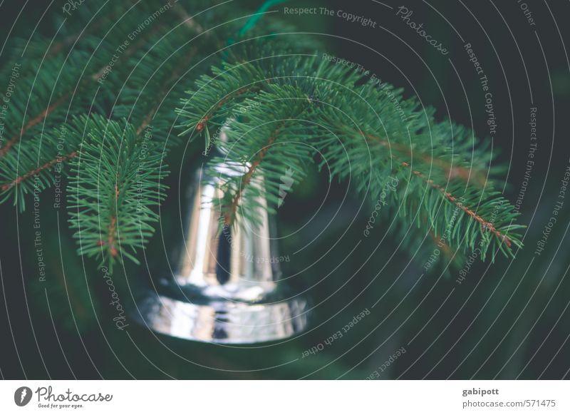 Baumschmuck traditionell Sinnesorgane Winter Feste & Feiern Weihnachten & Advent Natur Tanne Tannenzweig Weihnachtsbaum hängen glänzend natürlich braun grün