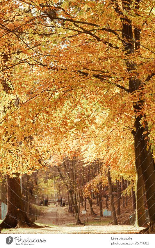 goldig... Natur Wasser Pflanze Sonne Baum Landschaft ruhig Blatt Wald Umwelt Wärme Herbst Wege & Pfade Gras natürlich Park