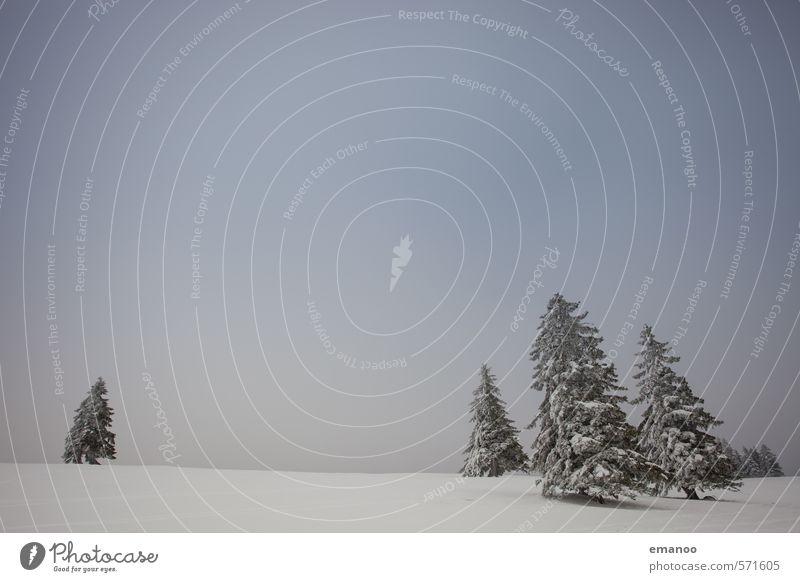 Weihnachtskartenlandschaft Himmel Natur Ferien & Urlaub & Reisen blau Pflanze weiß Baum Landschaft Winter kalt Berge u. Gebirge Schnee Eis Wetter Wachstum